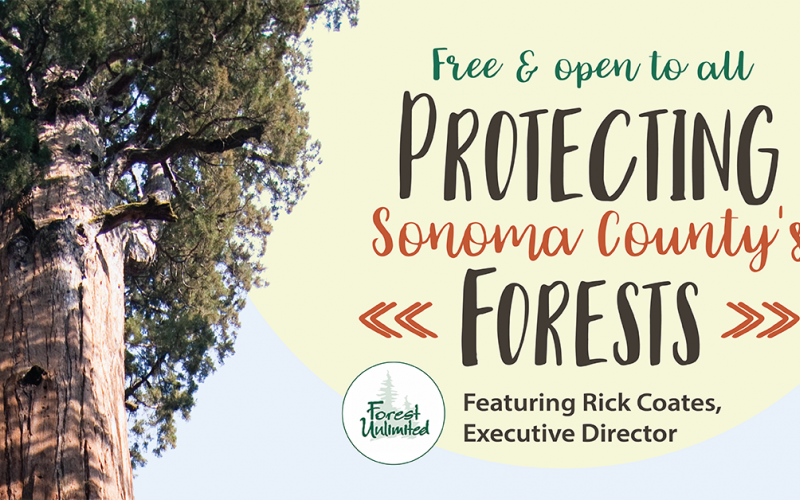 "redwood tree with text ""Protecting Sonoma County's Forests"""