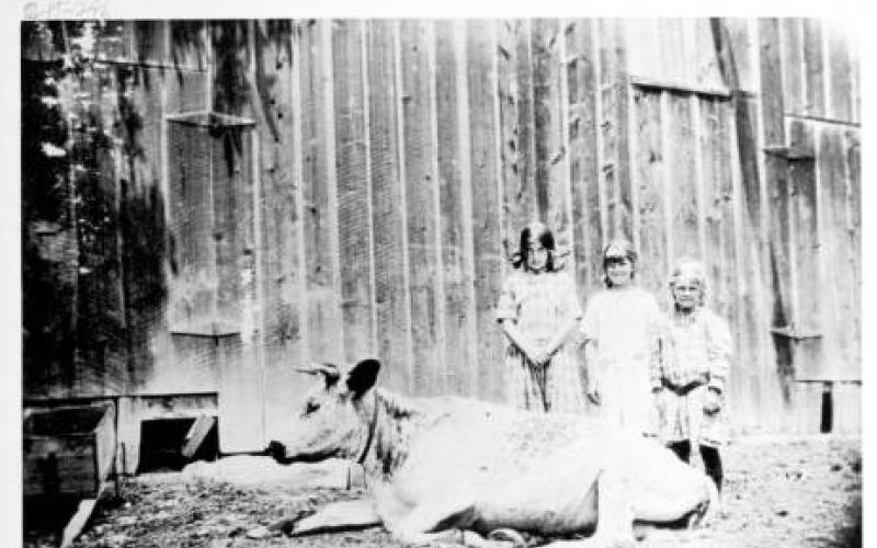 Children and cow on Speckter Ranch