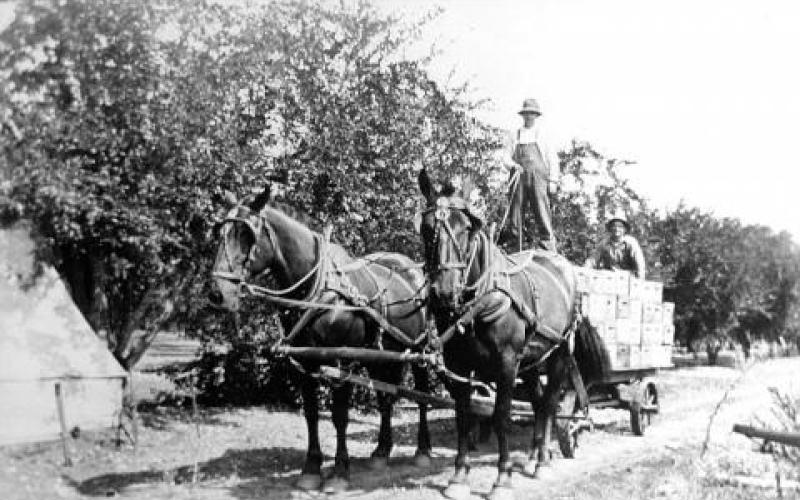 Horses Pulling a Wagon Filled with Boxes of Prunes, Geyserville, CA circa 1920 photo